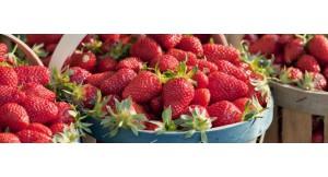 Producteur de fraises et produits dérivés