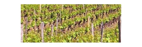 Confrérie des Vignerons de Oisly Thésée