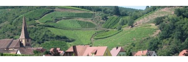Domaine Jean Boesch Decouvrez les vins d'Alsace de notre partenaire producteur
