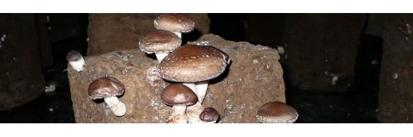 La cave Champignonnière des roches Achetez les produits de notre partenaire producteur